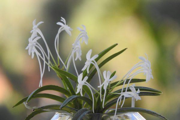 Изкуството да отглеждаш орхидея